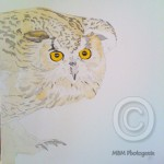 Stage 1, painting of a Siberian Eagle Owl by Mandi Baykaa-Murray