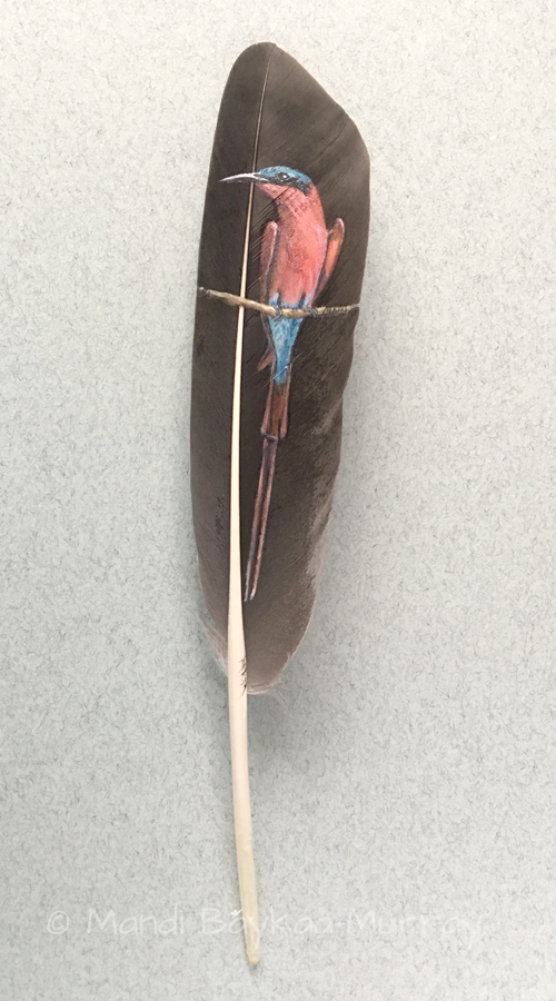 carmine bee eater painted feather