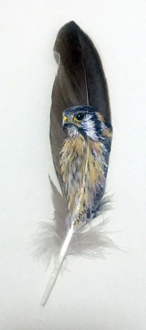 american kestrel painted feather