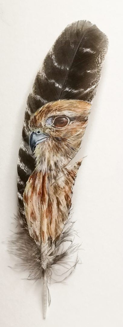 Merlin Painted on a Feather